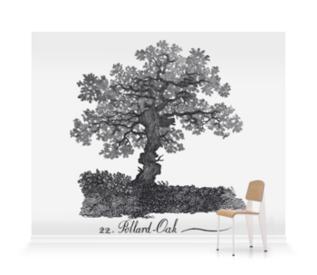 'Pollard Oak' Wallpaper Mural