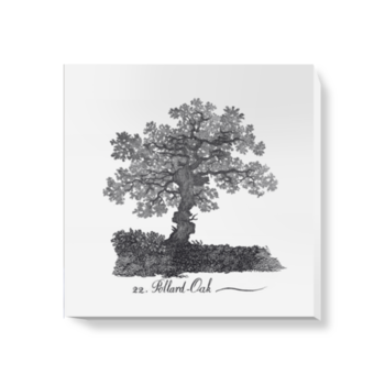 'Pollard Oak' Canvas Wall Art