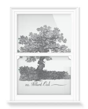 'Pollard Oak' Decorative Window Film