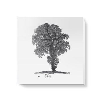 'Elm' Canvas Wall Art