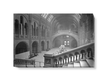'The Natural History Museum Central Hall, Looking South' Canvas wall art