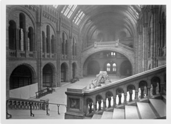 The Natural History Museum Hintze Hall Looking South