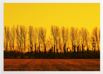 'Golden Landscape' Art Prints