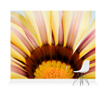 'Abstract Gazania II' Wallpaper Mural