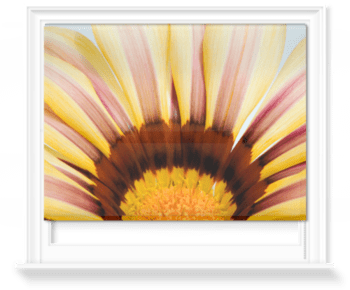 'Abstract Gazania II' Roller Blind