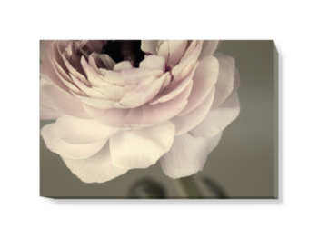 'Ranunculus II' Canvas Wall Art