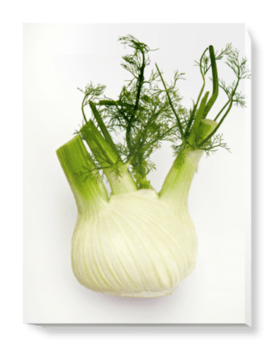 'Fennel on White' Canvas Wall Art