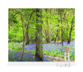 'Woodland Bluebells' Wallpaper Mural
