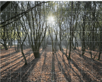 'Woodland Sunlight' Ceramic Tile Mural