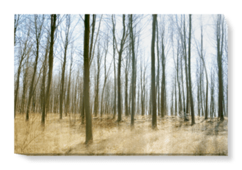 'Atmospheric Woodland' Canvas Wall Art