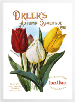 'Dreer's Autumn Catalogue' Art Prints