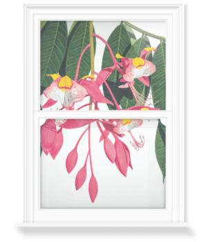 'Pride of Burma [Amherstia nobilis]' Decorative Window Film