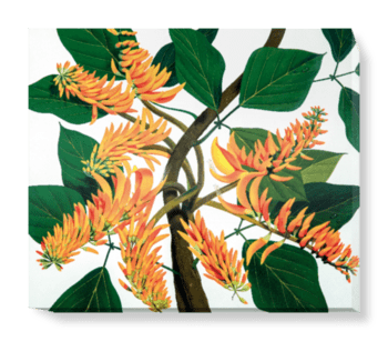 'Flame Tree [Erythrina poeppigiana]' Canvas Wall Art