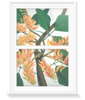 'Flame Tree [Erythrina poeppigiana]' Decorative Window Film