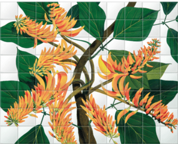 'Flame Tree [Erythrina poeppigiana]' Ceramic Tile Mural