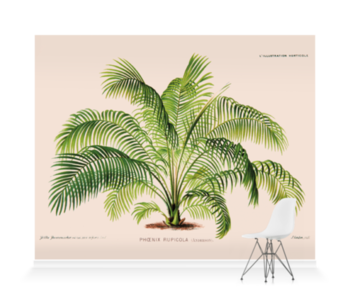 'Cliff Date Palm [Phoenix rupicola]' Wallpaper Mural