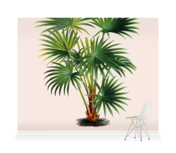 'Cabbage-tree Palm [Livistona australis]' Wallpaper Mural