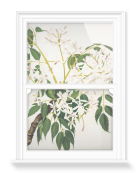 'China Berry [Melia azedarach]' Decorative Window Film
