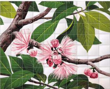 'Malay Apple [Eugenia malaccensis]' Ceramic Tile Mural