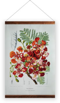 'Royal Poinciana [Poinciana regia]' Wall Hanging