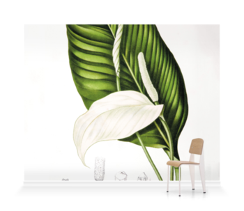 'Peace Lily [Spathiphyllopsis minahassae]' Wallpaper Mural