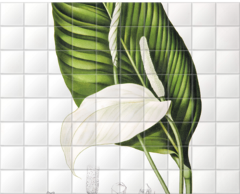 'Peace Lily [Spathiphyllopsis minahassae]' Ceramic Tile Mural