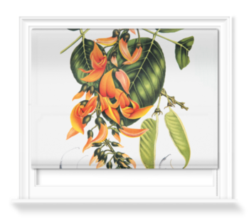 'Flame of the Forest [Butea frondosa]' Roller Blind