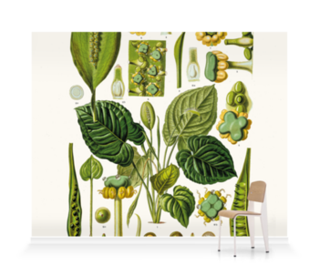 'Spathicarpa Hastifolia' Wallpaper murals