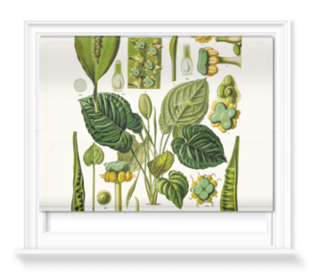 'Spathicarpa Hastifolia' Roller blinds
