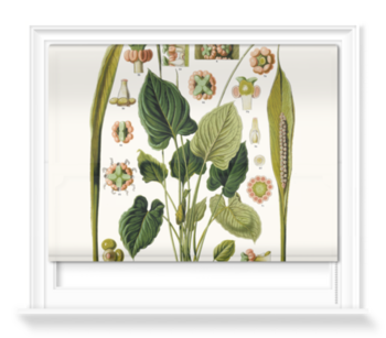 'Spathicarpa Hastifolia Study' Roller blinds