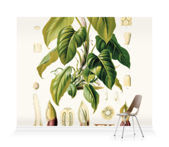 'Philodendron Fragrantissimum' Wallpaper murals