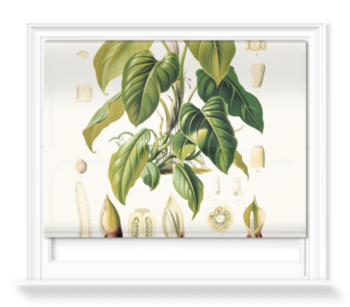 'Philodendron Fragrantissimum' Roller blinds