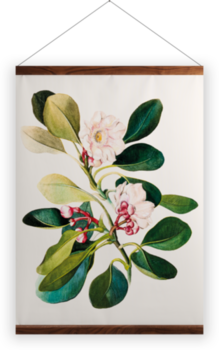 'Clusia Grandiflora' Wall hangings