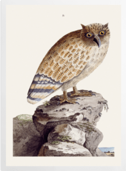 'The Great Ceylonese Eared Owl' Art Prints
