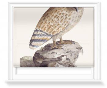 'The Great Ceylonese Eared Owl' Roller Blind