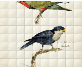 'Two studies of Parrots' Ceramic Tile Mural