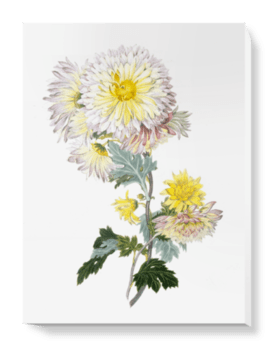 'Buff Chrysanthemum' Canvas Wall Art