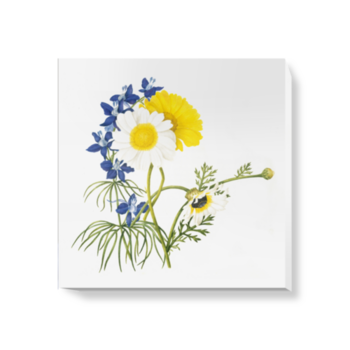 'Chryantemum frutescens & Delphinium grandiflorum' Canvas Wall Art
