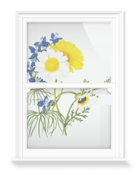'Chryantemum frutescens & Delphinium grandiflorum' Decorative Window Film