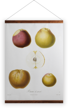 'Apple 'Pomme de finale'' Wall Hanging