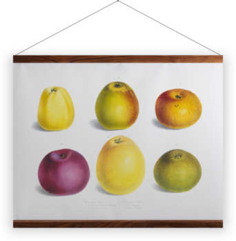 'Apple 'Early wax', 'Browns Summer Beauty', 'Thorll Pippin', 'Sops of wine', 'Eve apple', 'Hicks Fancy'' Wall Hanging