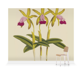 'Laelia dormaniana' Wallpaper Mural