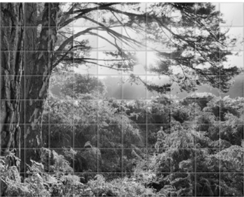 'New Forest Dawn B&W' Ceramic Tile Mural