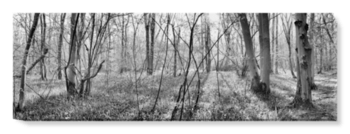 'Waresley Woods B&W' Canvas Wall Art