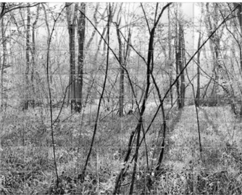 'Waresley Woods B&W' Ceramic Tile Mural
