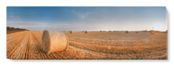 'Round Wheat Bales In Field After Harvesting' Canvas Wall Art
