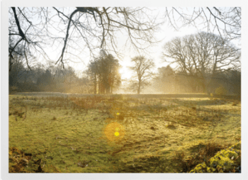 'Forest of Bowland I' Art Prints