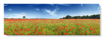 'Poppies' Canvas Wall Art