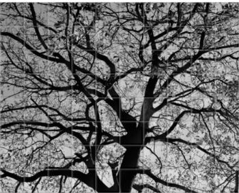 'Oak Trees in Winter B&W' Ceramic Tile Mural