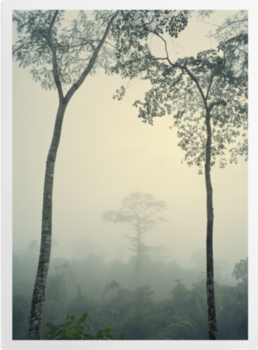 'Rainforest, Papua New Guinea' Art Prints
